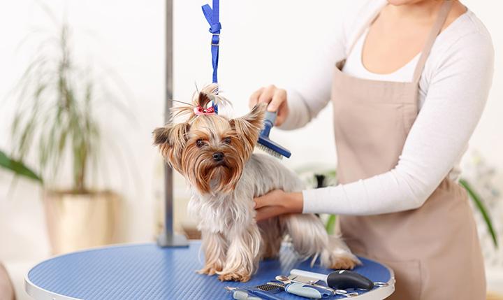 dog grooming ideas